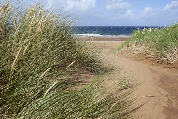 Sandwood Bay, marram grass. Credit François Bertin.